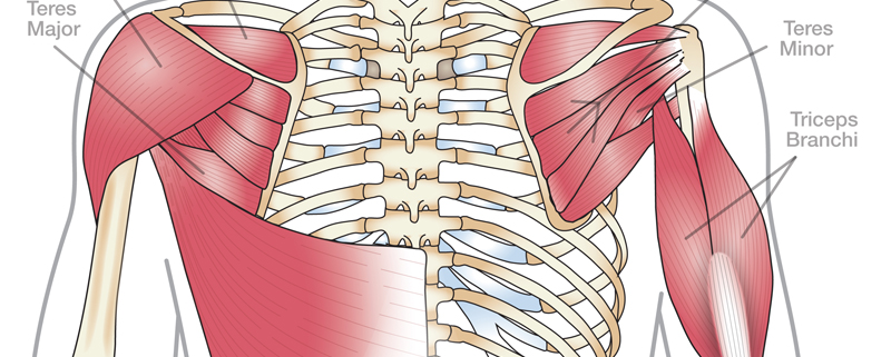 Anatomy 101: Shoulder Muscles